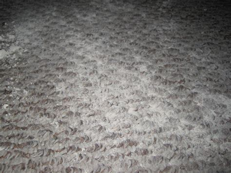 Fleas In Rug by Diatomaceous Earth For Fleas Saving One Pet At A Time