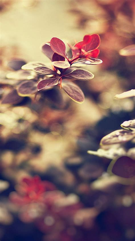 cute hd wallpapers for iphone 6 cute red leaves iphone 6s wallpapers hd