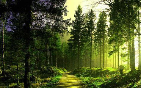 imagenes hd bosques fondo pantalla bosque camino