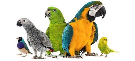 100 colorful facts about birds fact retriever com