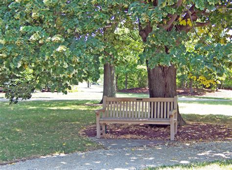 park with bench park bench free stock photo public domain pictures