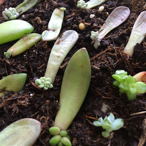 Whats New At The Succulent by Growing My Own Succulents Rawpottery