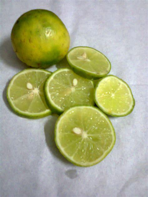 jeruk nipis dwi kusuma