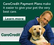 care credit for dogs dallas veterinary dentistry pet dentist surgery pets dental care