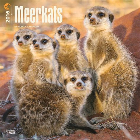 Cat Calendar 2018 Marks And Spencer Meerkats Calendars 2018 On Abposters