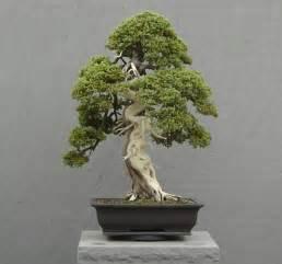bonzi tree flowering bonsai facts about bonsai flowers flowers