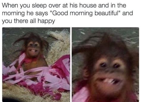 Baby Monkey Meme - a stellar collection of the best images found on the internet this week thechive