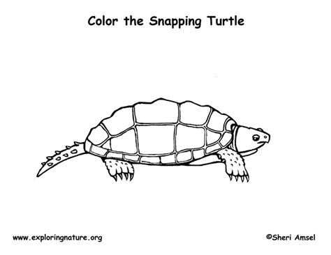 Snapping Turtle Coloring Page Snapping Turtle Coloring Pages