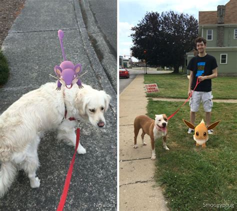 when can a puppy go outside for walks when this animal shelter asked pok 233 mon go players to walk their dogs they didn t