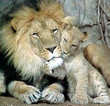 blogs top  animal parents