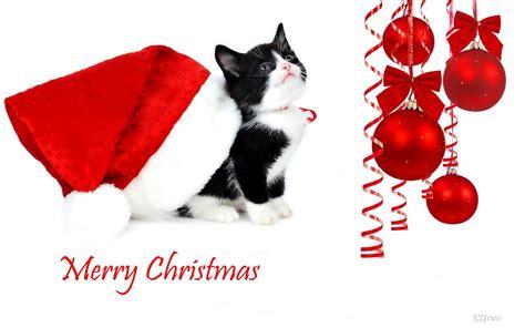 harley ann wolf christmas for two bombki kot czapka mikołaja