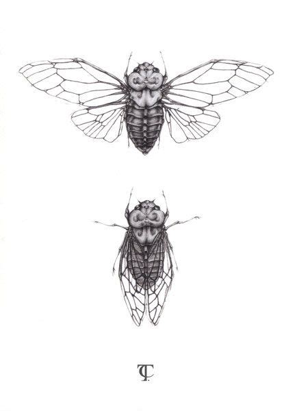 cicada tattoo cicada illustration a5 print tattoos