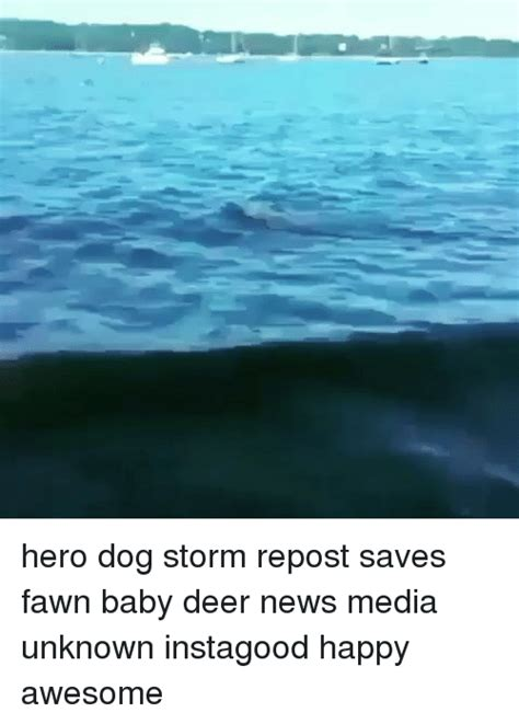 saves fawn repost saves fawn baby deer news media unknown instagood happy awesome