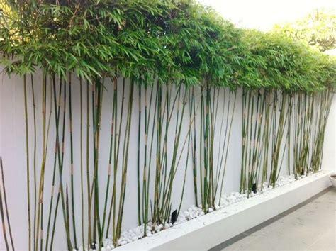 sichtschutz für die terrasse 52 die besten 25 ideen zu bambus im k 252 bel auf