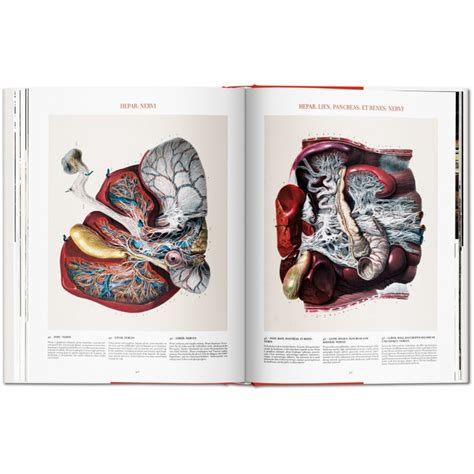 bourgery atlas of human anatomy and surgery taschenboekhandel bourgery atlas of human anatomy and surgery iep taschen libri it