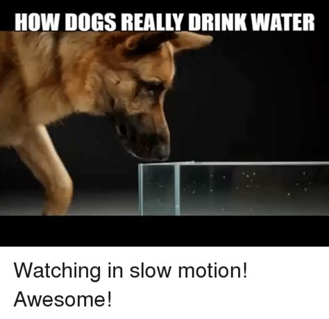 Motion Memes - 25 best memes about in slow motion in slow motion memes