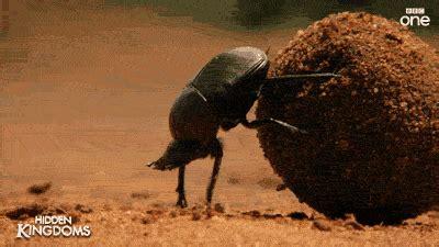 The Dung Beetle Bandits ezekiel 31 israelite invincible army august 2015