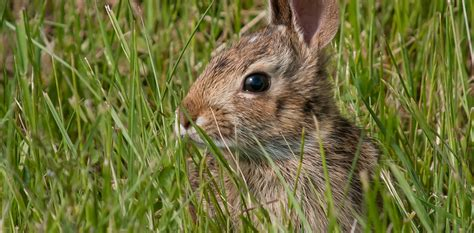 the rabbit how the culture of corrections encourages crime books climate change threatens more than two thirds of rabbit