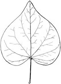 Leaf Outline Shapes by Leaf Shape Outline