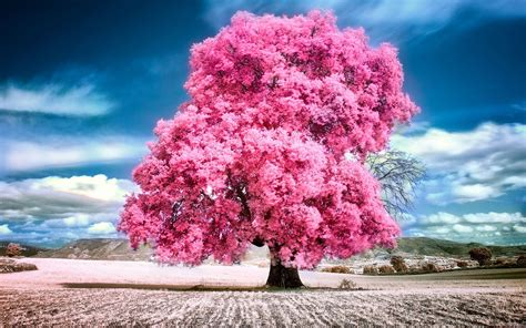 wallpaper summer pink sky clouds pink summer beauty beautiful tree nature