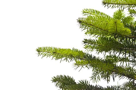 green branches of a christmas tree photograph by ulrich schade