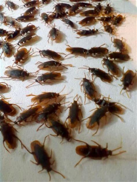 scarafaggi volanti foto scarafaggi di plastica in dono per le feste 1 di 4
