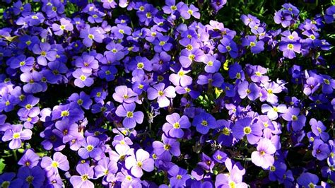 winter flowers for the garden the best winter flowers for your garden pacific outdoor