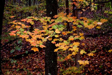 bright colored tree fall leaves forest foliage autumn