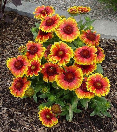 fiore di ninfea significato ninfea linguaggio dei fiori miti e storia il giardino