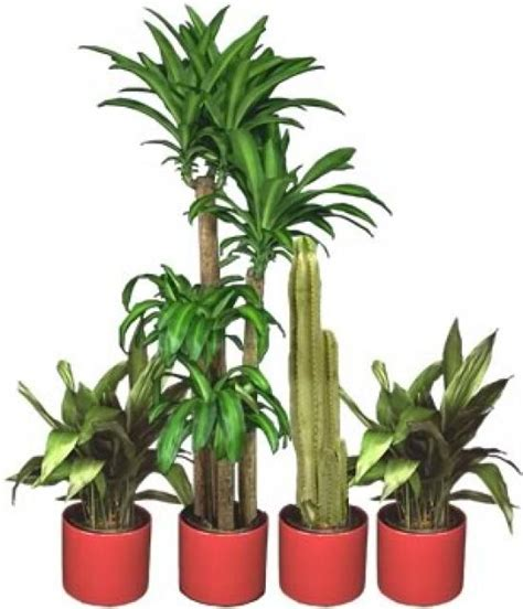 tropical foliage indoor plants indoor tropical plants indoor tropical plants images frompo