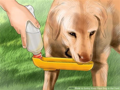 how to keep dog in yard how to safely keep your dog in the yard 12 steps with
