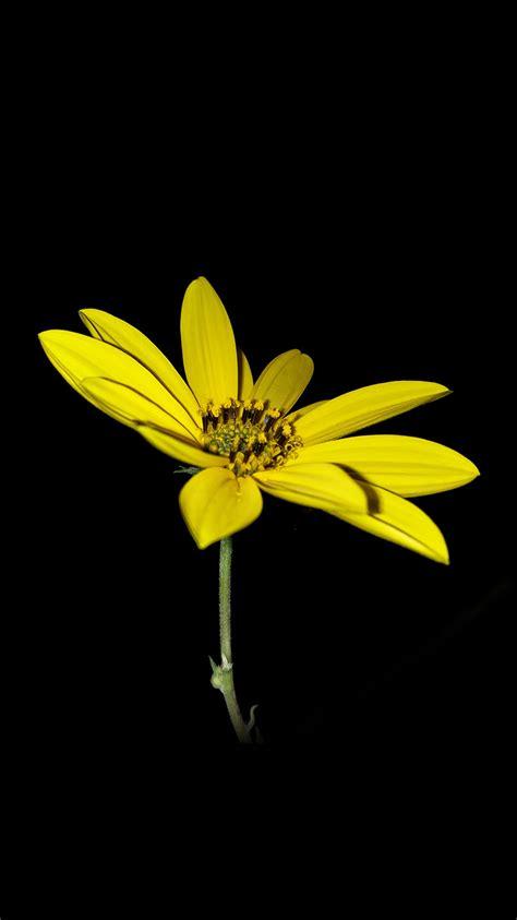 iphone 6 wallpaper yellow flower ipad
