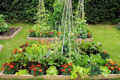 World Therapy Connection 5 Tips To A Perfect Summer Garden Vegetable And Flower Garden