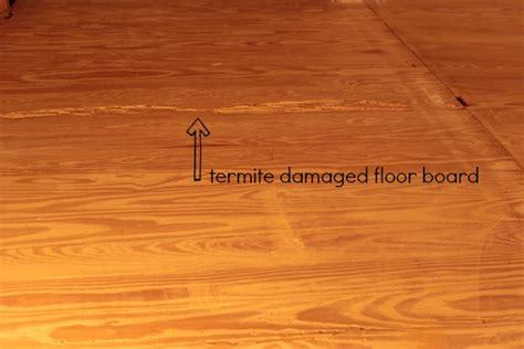 Termite Damage To Hardwood Floors by A Hardwood Floor Repair