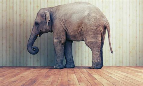 elephant in the room conversations we avoid in marriage the crosspoint