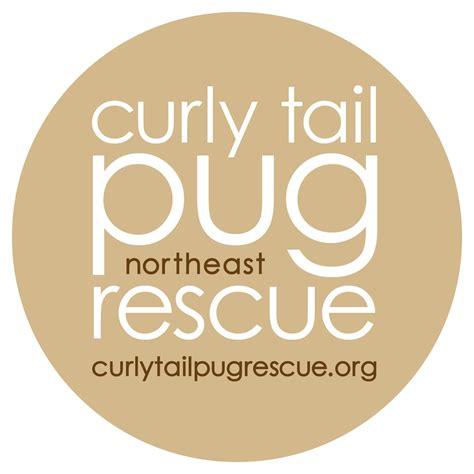 northeast pug rescue curly pug rescue