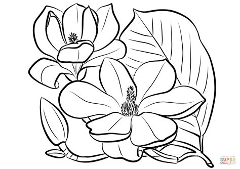 coloring pages of magnolia flowers mississippi magnolia flower coloring page coloring pages