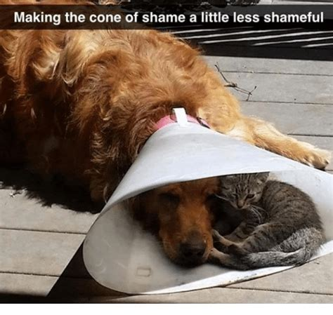Cone Of Shame Meme - 25 best memes about one direction one direction memes