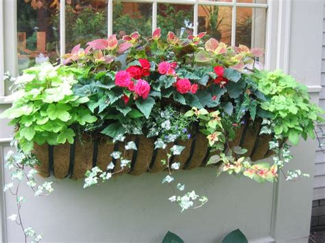 Flowers For Planter Boxes In Sun by 25 Best Ideas About Window Boxes Summer On