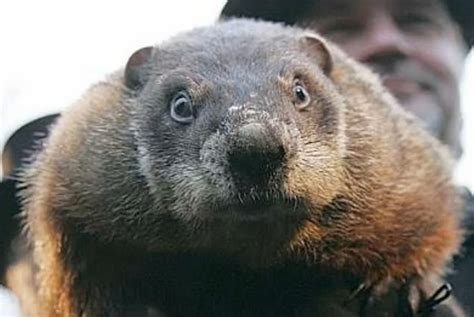 groundhog day us 5 things you didn t about groundhogs