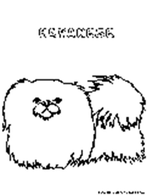havanese dog coloring page dogs coloring pages free printable colouring pages for