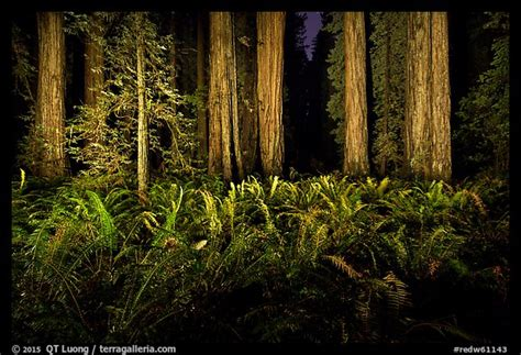Redwood Lighting by 187 Light Painting The Redwood Forest From Qt Luong S