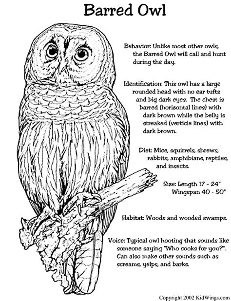barred owl coloring page barred owl they live by us they will visit every evening