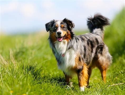 healthiest breeds 10 most healthiest breeds in the world and fur