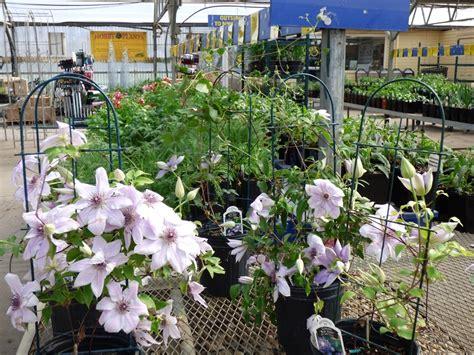 Lowes Garden Center Flowers by Lowe S Garden Center Minot Nd