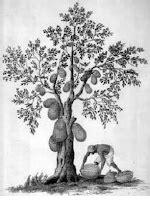Contoh Soal psikotes Baum Test - Karirplus.web.id