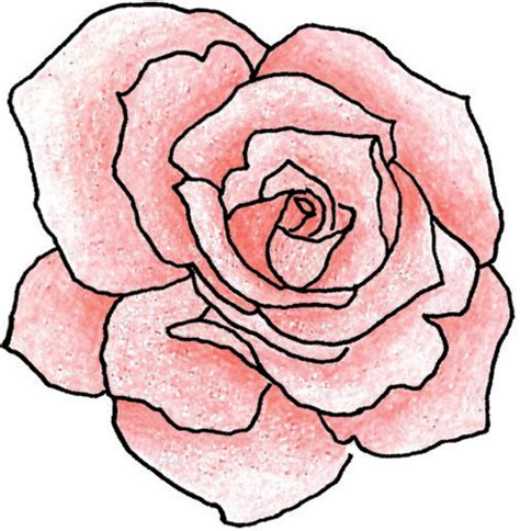 simple rose tattoo drawing roses outline drawing clipart best
