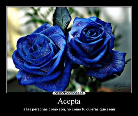 imagenes de rosas azules con frases de amor frases con mariposas azules imagui