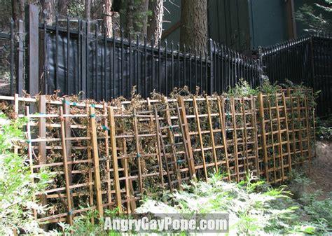 privacy fence trellis scientology peaks gallery fence raid