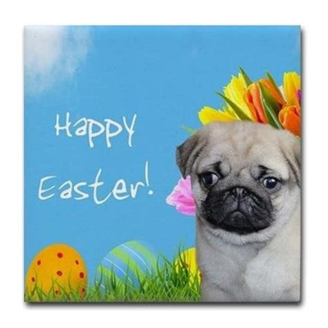 easter breaks with dogs 17 best images about easter on chihuahuas